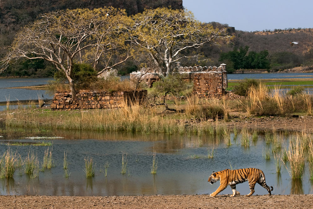 Ranthambore National Park - A Mesmerising Experience with Wild Voyager